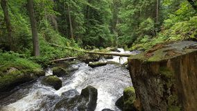 小瀑布在森林里 免版税库存图片