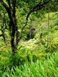 小瀑布在毛伊,夏威夷 库存图片