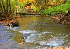 水小瀑布在深森林里 免版税库存图片