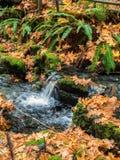 小瀑布在秋天 库存图片