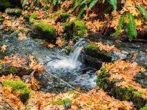 小瀑布在秋天 免版税图库摄影