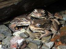 小瀑布青蛙在桥梁下 图库摄影