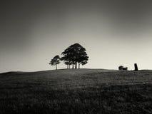 小灌木林结构树 免版税图库摄影