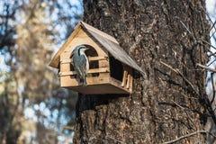小灰色五子雀坐从胶合板的一个黄色鸟和灰鼠饲养者房子在公园 库存图片
