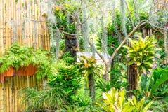 小热带庭院有热带植物风景背景 库存图片