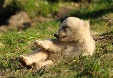 小熊逗人喜爱极性 免版税库存图片