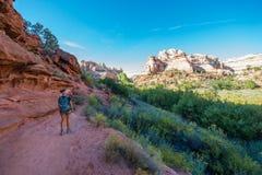 小牛小河峡谷足迹的远足者 免版税库存照片
