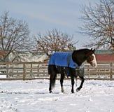 小牧场冬天 库存图片