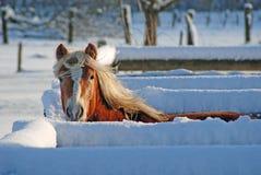 小牧场冬天 免版税图库摄影