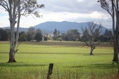 小牧场和山 免版税图库摄影