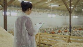 小牧场的检查有鸭子的在家禽场 股票录像