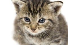 小特写镜头的小猫 免版税库存图片