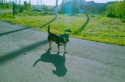 小犬座舔自己 与背后照明的照片 库存照片