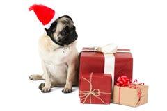 小犬座,在一个红色矮子帽子,在圣诞节礼物附近坐 查出 免版税图库摄影