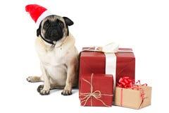 小犬座,穿戴在一个红色帽子,在包装纸包装的礼物附近坐 背景查出的白色 库存照片