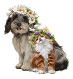小狗、小猫和花水彩图画 图库摄影
