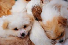 小狗一起休眠的数 免版税库存照片
