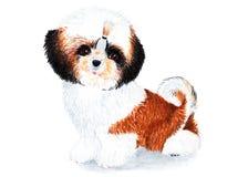 小狗与长的头发的Shih慈济 额嘴装饰飞行例证图象其纸部分燕子水彩 库存照片