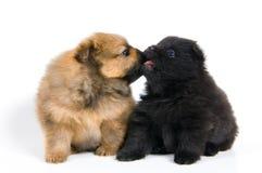 小狗二 免版税图库摄影