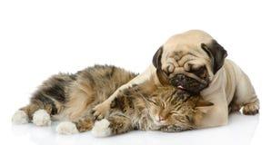 小狗亲吻一只猫 免版税图库摄影