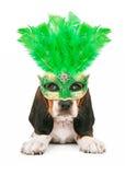 小狗佩带的狂欢节面具 免版税库存照片