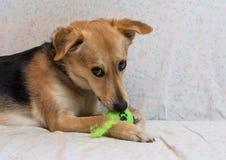 小狗使用 免版税库存图片
