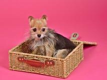 小狗准备好的手提箱旅行 图库摄影