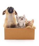 小狗和两只小猫在箱子 免版税库存图片