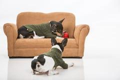 小狗和圣诞节装饰品 免版税库存图片