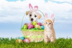 小狗和小猫与复活节篮子 免版税库存照片