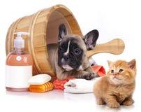 小狗和小猫在木面盆与肥皂suds 免版税库存照片