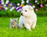 小狗和小猫在绿草 focosed在猫 免版税库存照片