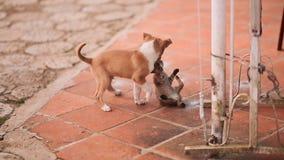 小狗和小猫被演奏 股票视频