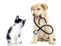 小狗和小猫 免版税库存照片