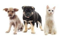 小狗和猫 库存照片