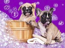 小狗和肥皂suds 免版税库存图片