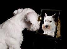 小狗和镜子 库存图片