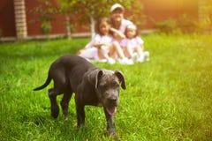 小狗和defocused家庭有孩子在夏天在绿色庭院里 库存图片