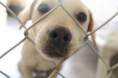 小狗哀伤的逗人喜爱的鼻子特写镜头和篱芭 库存图片