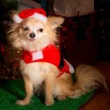 小狗圣诞派对 库存图片