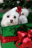 小狗圣诞老人 库存照片