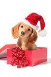 小狗圣诞老人 免版税库存照片