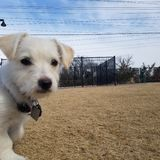 小狗在公园 库存照片