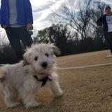 小狗在公园 免版税库存照片
