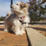 小狗在公园 免版税库存图片