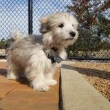 小狗在公园 库存图片