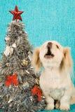 小狗在圣诞树旁边的唱歌颂歌在蓝色背景 免版税库存图片