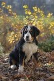 小狗在庭院里 免版税库存图片