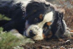 小狗在庭院里 免版税库存照片