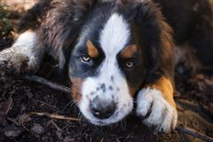 小狗在庭院里 库存图片